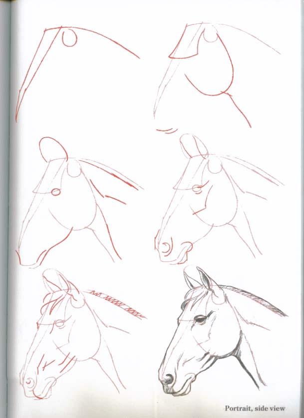 Como Desenhar Cavalos Hipismo Co